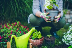 FMM Gardening Club featured on CBC News!